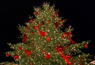 Weihnachtsbaum in Düsseldorf