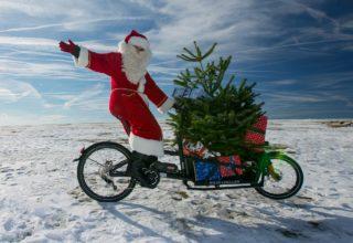 Weihnachtsbaum-Transport per Fahrrad